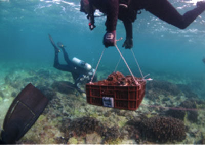 Environmental Works – Coral Management Plan. Relocation of 5.400 Coral colonies from power cable route